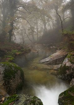 Haunted forest, Enchanting woods / Homem River in Brufe, Portugal Beautiful World, Beautiful Places, Beautiful Pictures, Beautiful Forest, Enchanted Wood, Nature Aesthetic, All Nature, Belle Photo, Beautiful Landscapes