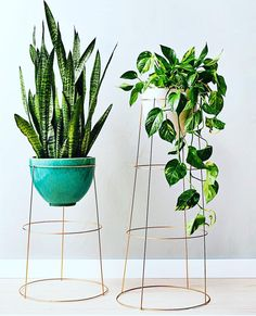 Cool Plant Stand Design Ideas for Indoor Houseplant - these literally look like upside down tomato cages. Plantas Indoor, Decoration Plante, Diy Decoration, Room Decorations, Tomato Cages, Tomato Trellis, Diy Plant Stand, Tall Plant Stand Indoor, Tall Indoor Plants