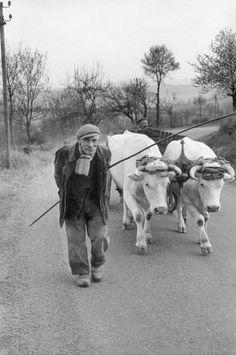 Photo by Henri Cartier-Bresson - 1960, Auvergne, Puy-de-Dôme Henri Cartier Bresson, Robert Doisneau, Candid Photography, Street Photography, Henri Matisse, Old Photos, Vintage Photos, Classic Photographers, Carol Ann Duffy