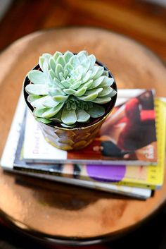 A Fashion Blogger Gets A Chic Living Room Makeover #refinery29  http://www.refinery29.com/homepolish-living-room-makeover#slide-5  Everyone loves plants, and succulents are some of the easiest to care for.