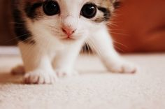 big eyed kitty
