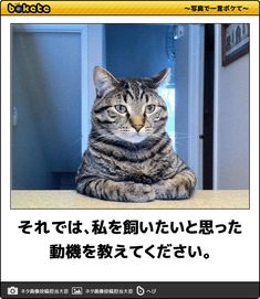 それでは、私を飼いたいと思った動機を教えてください。 Animals And Pets, Funny Animals, Cute Animals, Haha Funny, Funny Memes, Warehouse Management, Sarcasm, Comedy, Funny Pictures