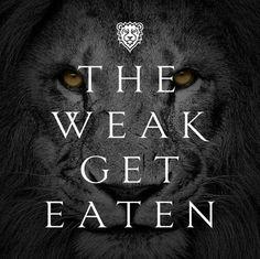 Always stay strong! The weak get eaten