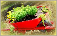 What was once a broken wheelbarrow is now a beautiful focal point in the garden.