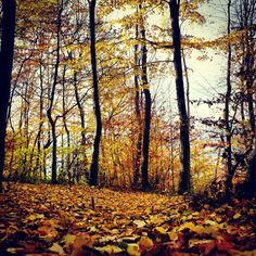 ...to get lost in the woods, gold autumn  . . . childhood, pure childhood   About Pure Romania - http://www.pure-romania.com/romania-photos/   #happiness #Subcarpathians #romania #princecharles #BBC #pureromania #destination #inspire #travel #lonelyplanet #dreamhouse #house #peace #pure #wood #trees #autumn #pureautumn