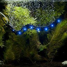 Using Aquarium Air Stones & Bubble Wands in Your FishTank - Fish   Pet Care Corner by PetSolutions - PetSolutions Blog