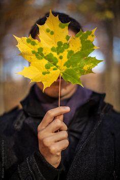 Man Hiding Behind an Autumn Leaf  by Mosuno