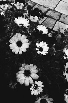 ✔ Wallpaper Preto E Branco Flores Tumblr Wallpaper, Tumblr Backgrounds, Black Wallpaper, Wallpaper Backgrounds, Iphone Wallpaper, Black And White Photo Wall, Black And White Pictures, Black White, Gray Aesthetic