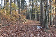 An jedem Baum muss man schnüffeln ...  übermorgen sollten wir wieder zuhause sein, wenn wir uns beeilen. Trunks, Plants, Resin, Ad Home, Drift Wood, Tree Trunks, Plant, Planets