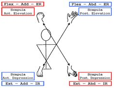 PNF patterns - arm and scapula diagonals