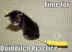 Quittitch Kittin! =3