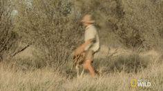 New party member! Tags: animals fight fighting australia nat geo wild chase kangaroo chasing kangaroo dundee