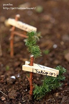 Clothespins as plant markers - creative plant garden flower markers Garden Ideas To Make, Garden Yard Ideas, Veg Garden, Vegetable Garden Design, Garden Crafts, Garden Projects, Garden Labels, Plant Labels, Garden Plant Markers