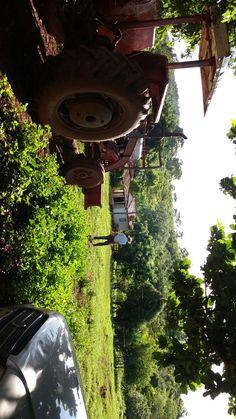 Paraiso. Fazenda onde passei a infância ❤