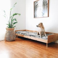 this diy dog crate furniture piece will transform your living room 1 ⋆ Home & Garden Design Luxury Dog Kennels, Dog Crate Furniture, Furniture Market, Crate Decor, Diy Dog Crate, Diy Dog Bed, Cute Dog Beds, Large Dog Bed Diy, Large Dogs