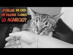 Como Bañar Correctamente A Tu Gato Por Primera Vez - SiamCatChannel - YouTube