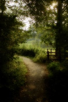"""""""100 Acre Wood"""" (home to Winnie the Pooh), Hartfield, East Sussex England"""
