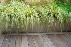 Rectangular planter with grasses.