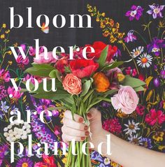 Bloom at Jacksonville State University! Join a club, mast a new person, get out of your room! College is what you make it, so why not make it the best? http://www.jsu.edu