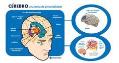 A sua personalidade é o resultado de uma complexa interação de fenômenos que ocorrem dentro do ambiente cerebral. Várias áreas e estruturas, desde as mais primitivas até as mais recentes, definem juntas quem você é. A imagem ilustra as mais importantes.