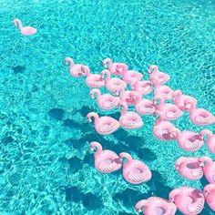 99 Best Home Flamingo Balls images in 2019