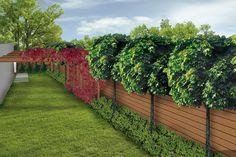 waski ogrod-styl nowoczesny-pergola z winobluszczem