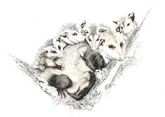 Opposum original watercolor painting, 5x7, animals, wild animals earthspalette op Etsy, 26,92 €
