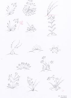 Plants and flowers 4