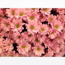 Image result for flower prints