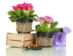 compo plantes interieures modernes - Recherche Google