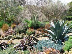 debora carl landscape design mediterranean landscape san diego debora ca Succulent Landscaping, Hillside Landscaping, Landscaping Plants, Landscaping Ideas, Backyard Ideas, Garden Ideas, San Diego, Xeriscaping, Outdoor Retreat