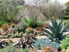 A xeriscape garden can still be full of color and texture without flowers