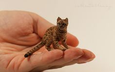 Dollhouse miniature Bengal cat.  EBay seller marinabmw is M. Petlevey from Ukraine and makes all kinds of amazingly detailed animals.  That's all I can find out about her.