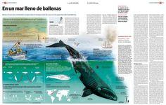 El esfuerzo por publicar infografías y elementos gráficos interesantes en diarios regionales merece alabarse doblemente. Hoy traemos un ejemplo del cántabro El Diario Montañés, con este increíble...