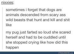 Pug farted