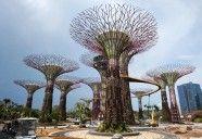 """El gobierno de Singapur creó un parque formado por 18 """"súper árboles"""", estructuras-jardines verticales que recogen agua de lluvia y energía solar por las cuales florecerán 226.000 plantas y flores de todo el mundo."""