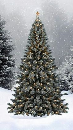 Perfect Christmas tree outdoors