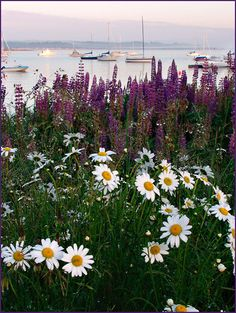 What could be better? Champs, Pretty Flowers, Wild Flowers, Maine, Beautiful World, Peonies, Eye Candy, Paradise, Lord
