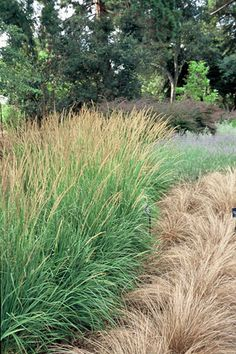 Interesting grasses