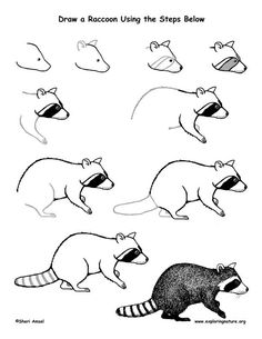 Raccoon Drawing Lesson