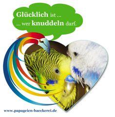 Passend zum Bild: Wie habt ihr begonnen mit der Vogelhaltung? Einzlhaltung, gleich ein Pärchen oder gar einen Schwarm?  Weitere Tipps und tolle Produkte gibt es hier -> www.papageien-baeckerei.de