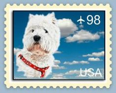 cool - westie stamp