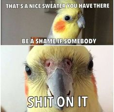 Parrot owner problems. It is such a problem! Gotta continue the potty-training!