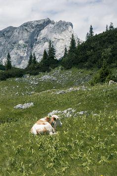 1. Etappe BergZeitReise - Androthalm  . . . (c) stefanfilzmoser.at #hochsteiermark #bergzeitreise #wandern #mountain #mountainlove #hiking #austria #steiermark #österreich #lake #wanderlust #travel #travelsofar Mountain Love, Berg, Wanderlust, Mountains, Nature, Travel, Austria, Time Travel, Hiking