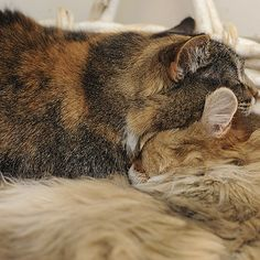They're the best cuddlers in the world. | 25 Reasons Why Animals Are Actually Your Best Friends