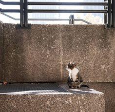 Cat and the light Foto del #InstaShootMadrid del domingo. #photooftheday
