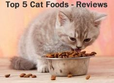 The+Top+5+Cat+Foods:+Cat+Food+Reviews+ ... see more at PetsLady.com ... The FUN site for Animal Lovers