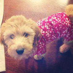 Winnie Macbarbie07's dog @Bethany Shoda Noel