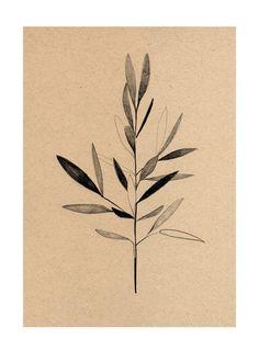 The Poster Club - Olive Print by Ekaterina Koroleva olive Gravure Illustration, Illustration Art, Illustrations, Poster Club, Wall Art Prints, Poster Prints, Posters, Botanical Tattoo, Botanical Illustration