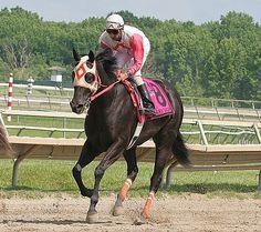 Ben's Cat #8 with Julian Pimentel riding won the $150,000 Parx Dash Stakes at Parx Racing in Bensalem, Pennsylvania June 17, 2012.